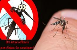 Comme chaque année pendant l'été, le moustique a la fâcheuse tendance à s'inviter dans notre maison ou sur notre terrasse. Pour éviter les piqûres et profiter des soirées d'été, nous vous proposons des des astuces anti-moustiques efficaces.