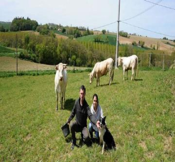Une femme qui aime beaucoup les animaux a choisi de prendre des photos comme un souvenir avec des vaches le jour ou elle va se marier