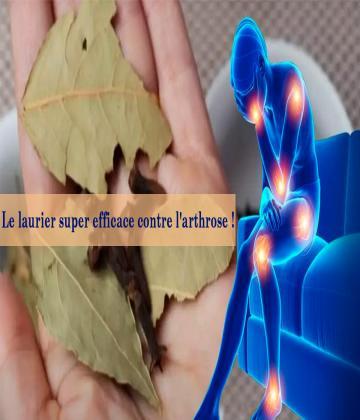 Le laurier a une action reconnue contre les douleurs articulaires et les rhumatismes.