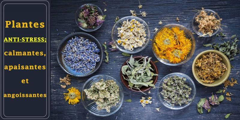 Nous sommes quotidiennement exposés à de nombreuses situations propices au stress. Vous souhaitez trouver une méthode naturelle pour vous relaxer, mais hésitez à vous tourner vers les plantes médicinales car vous ne savez pas trop quelles sont les plantes les plus appropriées ? Certaines plantes anti-stress ont la capacité de nous apaiser. Voici les 5 plantes médicinales apaisantes.