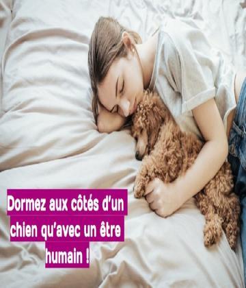 En fait il est conseillé de dormir aux côtés d'un chien qu'avec un être humain puisqu'il aura plusieurs bénéfices.